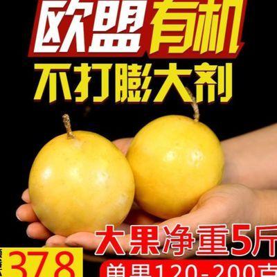 黄金百香果3大果5斤装特级一级白百西番莲新鲜水果现摘包邮带箱6