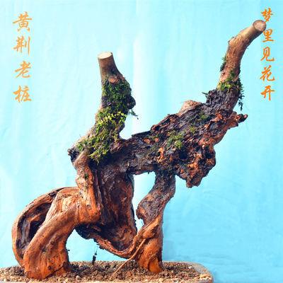 黄荆老桩 舍利桩 盆景疙瘩桩室内盆栽绿植百年老桩精品下山桩