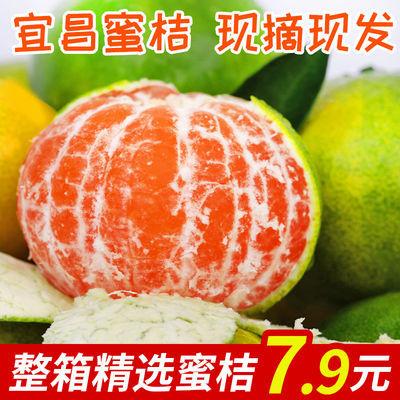 当季宜昌橘子水果新鲜蜜桔青皮桔子3/5/10斤装薄皮蜜桔孕妇水果