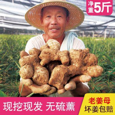 【山东大姜】新鲜生姜黄姜月子姜老姜老黄姜不水洗无硫熏带泥发货