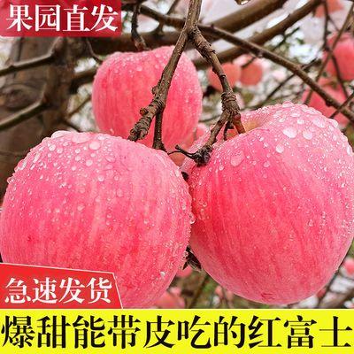 陕西应季红富士苹果批发5/10斤现摘现发当季新鲜脆甜苹果水果包邮