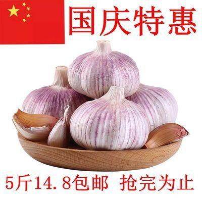 云南紫皮大蒜头5斤干大蒜头批发新鲜大蒜独蒜250g蔬菜类 新鲜蔬菜