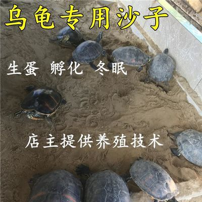 天然乌龟沙子冬眠产蛋孵化专用细沙河沙鱼缸无菌沙半水龟沙陆龟沙【3月14日发完】