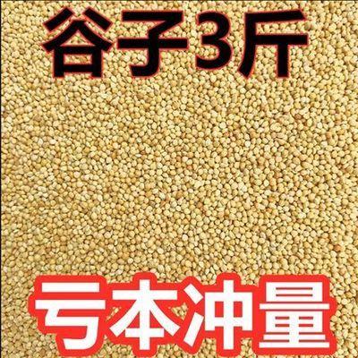 新黄谷子带壳小米虎皮牡丹玄凤中小型鹦鹉文鸟鸟粮鸟食鸟饲料3斤
