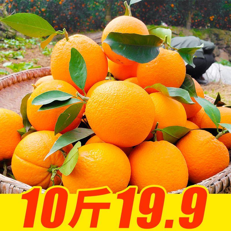 高山脐橙新鲜橙子四川脐橙香甜多汁
