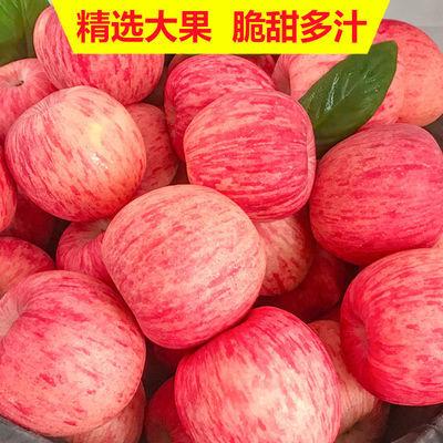 【新鲜脆甜】陕西红富士苹果新鲜水果5/10斤装现摘丑苹果非冰糖心