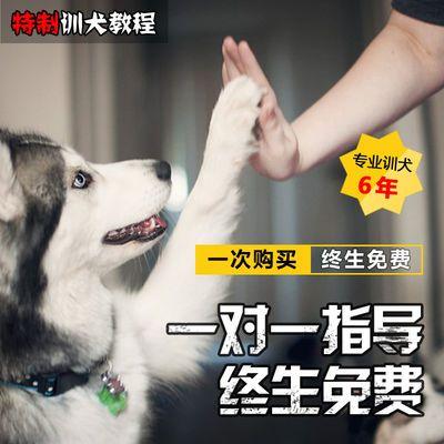 训狗宠物狗家养狗训练习惯培养视频教程训犬技巧培训教学狗狗课程