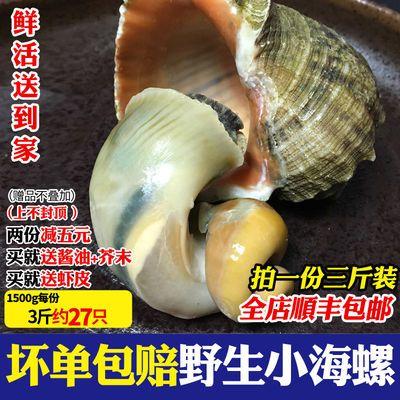 顺丰包邮新鲜小海螺野生红香螺大黄金螺尖螺鲜活海鲜贝类水产