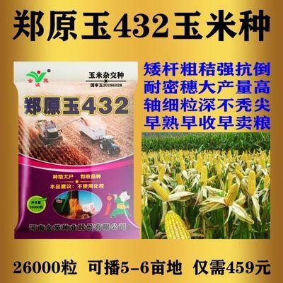 玉米新品种高产优良品种郑原玉432玉米种亩产高达1800斤抗旱早熟
