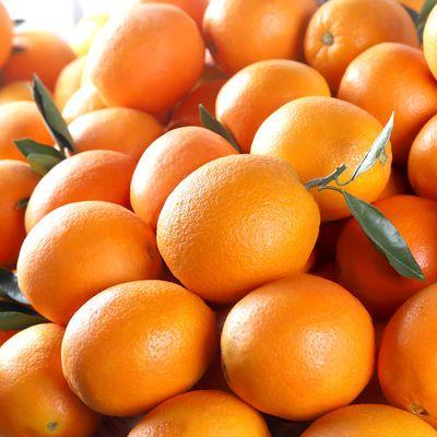 高山脐橙新鲜橙子水果鲜果橙手剥当季甜橙现摘现发批发孕妇薄甜