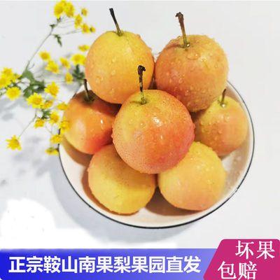 鞍山特产南国梨新鲜水果细皮南果梨五斤包邮香水梨5斤包邮
