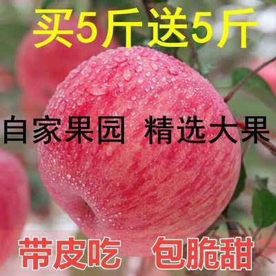 现摘陕西冰糖心红富士苹果当季水果批发3/5/10斤包邮孕妇吃不打蜡