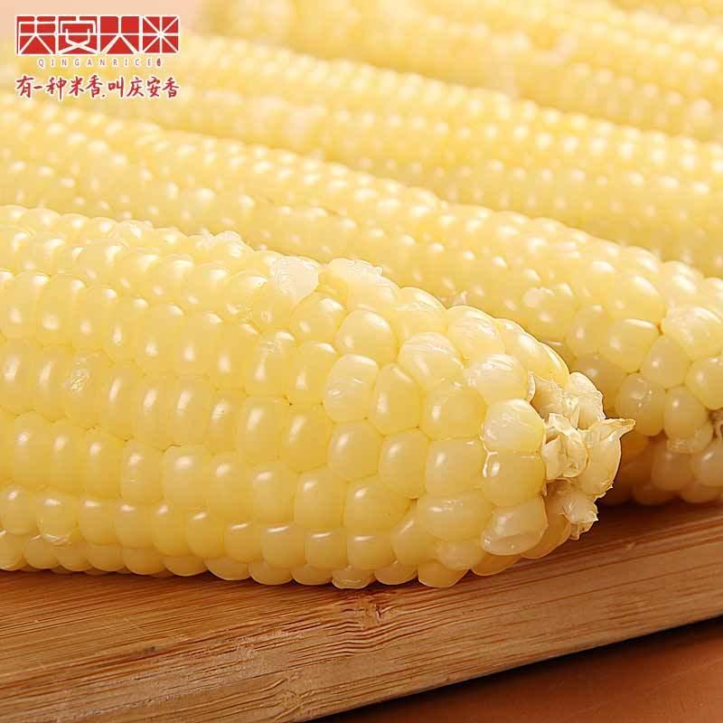 东北玉米糯玉米新鲜黑龙江粘玉米棒真空即食黏苞米甜玉米
