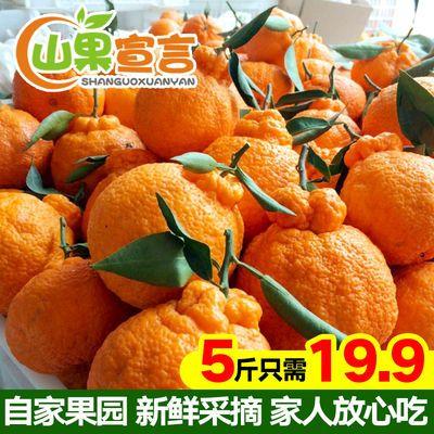 四川丑橘不知火丑柑丑八怪橘子当季新鲜水果批发耙耙柑桔子柑橘
