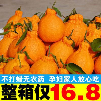 四川丑八怪丑橘不知火橘子当季丑柑丑桔子新鲜水果3/5/10斤装批发