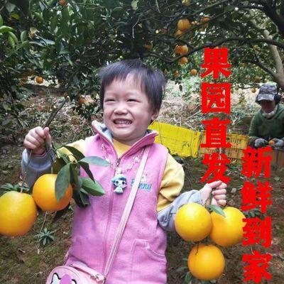 【送剥橙器】湖南�~山脐橙5/8斤包邮孕妇水果当季新鲜水果手剥橙