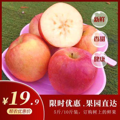 当季新鲜苹果水果5斤10斤批脆甜陕西红富士苹果水果现摘包邮