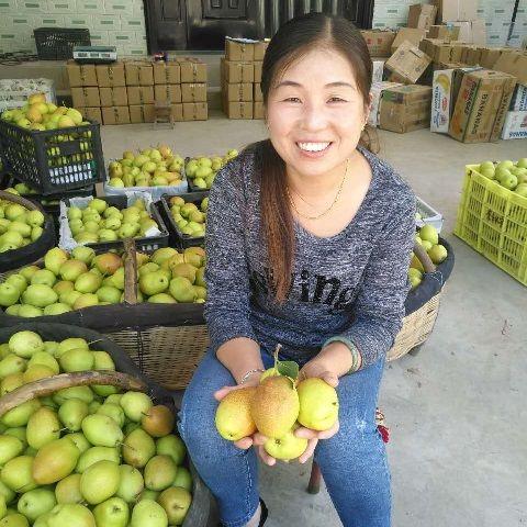 红香酥梨香梨酥梨陕西当季新鲜水果嫁接新疆梨10斤5斤1.5斤多规格