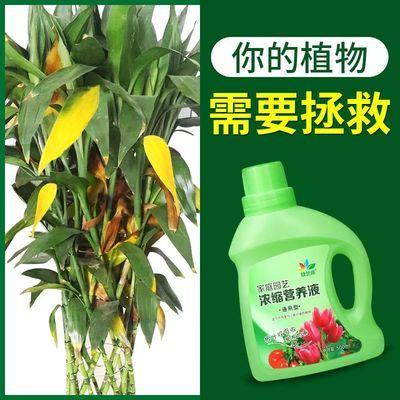 植物营养液花肥通用型盆栽绿萝专用复合肥料土水培多肉花卉有机肥