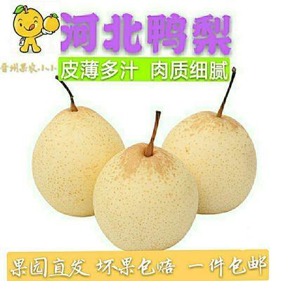 河北正宗大鸭梨新鲜水果梨子10斤水晶梨整箱批发1斤非雪梨皇冠梨