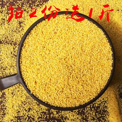 黄小米新米 月子食用小黄米粥养胃 山西特产五谷杂粮粗粮吃的早餐