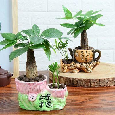 【送肥料】发财树盆栽客厅花卉绿植室内招财绿色植物办公室小盆景