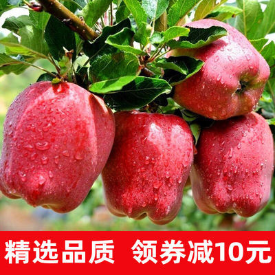 甘肃天水花牛蛇果苹果3-10斤装水果新鲜批发整箱包邮刮泥婴儿辅食