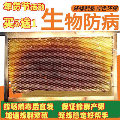 中华蜜蜂用巢脾 空脾无巢虫规格长48.5 中蜂巢脾意标脾笼蜂必备