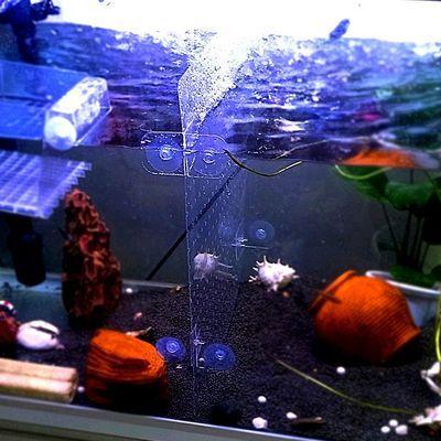 鱼缸隔离板隔热网透明挡板水族箱垫底盖板乌龟斗鱼混养幼鱼可裁剪【3月18日发完】