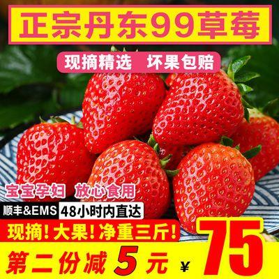 丹东99草莓 新鲜2斤3斤牛奶奶油东港九九红颜大草莓现摘应季水果