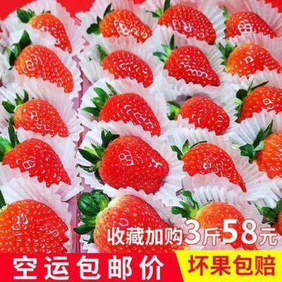 新鲜草莓现摘四川草莓水果新鲜奶油草莓冬草莓商用烘焙专用批发价