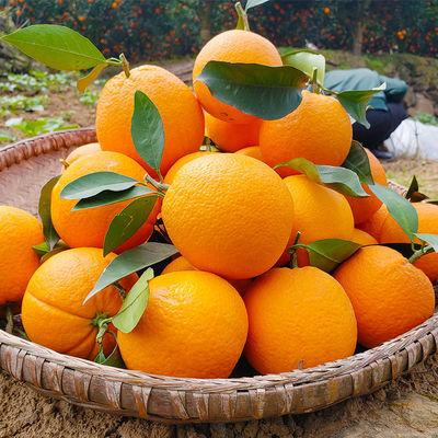 新鲜水果应季水果脐橙丰富维生素C美容养颜脐橙橙子整箱包邮【12月3日发完】