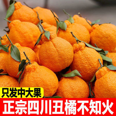 不知火真丑橘当季水果橘子耙耙柑丑柑桔子丑八怪包邮新鲜整箱批发