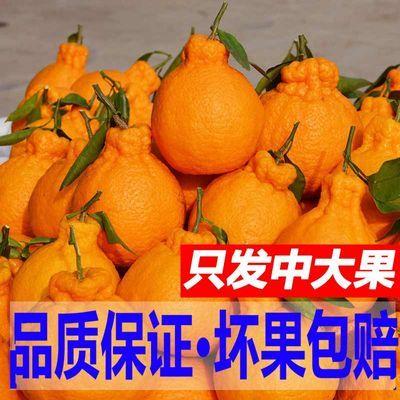 四川丑橘不知火丑八怪橘子新鲜孕妇水果当季柑橘桔子丑桔丑柑批发