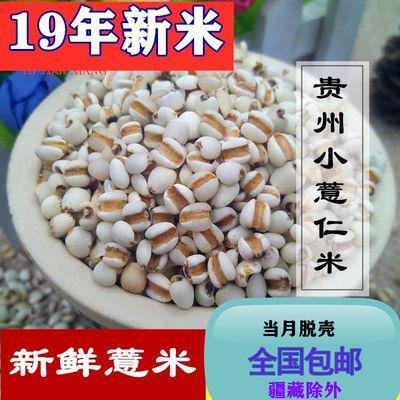 1/2/3斤新货大薏米新鲜非小薏米 薏米仁薏仁米苡仁五谷杂粮粗包邮