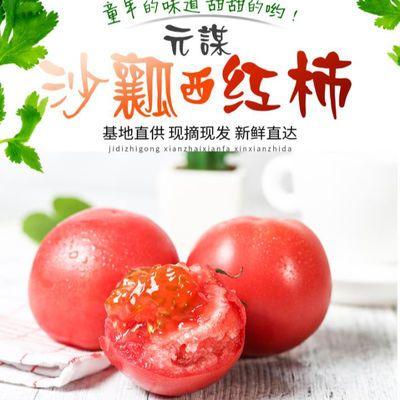 顺丰包邮云南露天基地种植水果番茄新鲜采摘