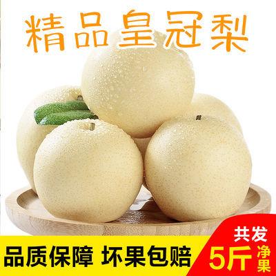 【净果5斤装】河北皇冠梨精品黄冠梨子新鲜水果产地直发脆甜多汁