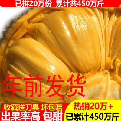 现摘发货海南菠萝蜜 黄肉干苞当应季新鲜水果包邮木菠萝 重量自选