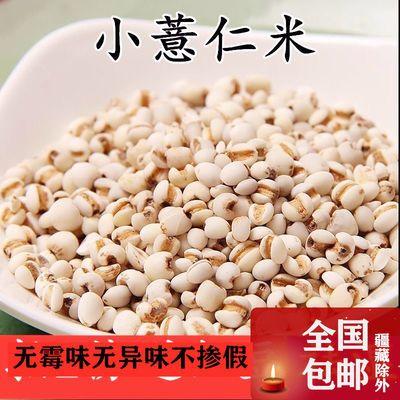 【祛湿】新鲜小薏米仁薏米贵州薏仁米小薏米苡米仁粗粮包邮批发
