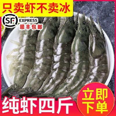【顺丰包邮】整箱青岛超大虾鲜活新鲜海虾对虾大号青虾白虾基围虾