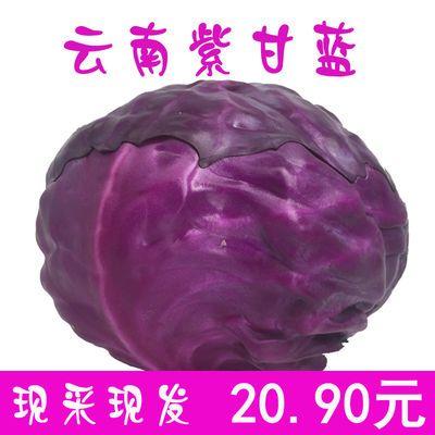 顺丰包邮新鲜紫甘蓝菜蔬菜沙拉当季新鲜紫包菜卷心菜原产地直发