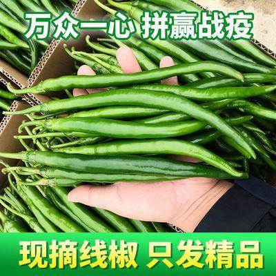 当季现摘小米椒新鲜朝天椒1-5斤特辣小尖椒农家青椒泰椒红椒批发