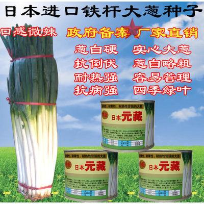 2019日本进口超级元藏大葱四季播种葱种子免邮费杆硬大葱种子包邮