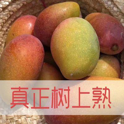 现货顺丰新鲜海南贵妃芒果树上熟现摘红金龙小芒果5斤装