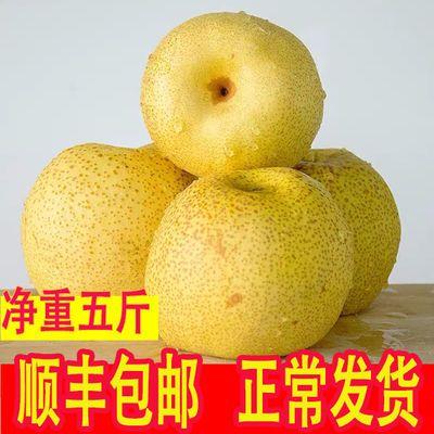 砀山梨酥梨5斤水果新鲜非皇冠翠冠青酥梨10斤整箱顺丰包邮