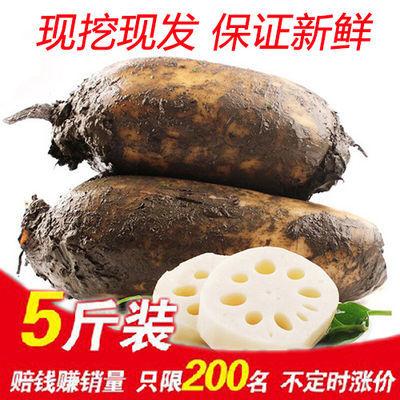 【新鲜现挖】新鲜莲藕 莲菜5斤装真空包装有机无公害绿色美味佳肴