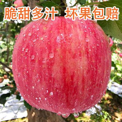 陕西正宗红富士苹果新鲜水果现摘脆甜孕妇吃5斤/10斤包邮