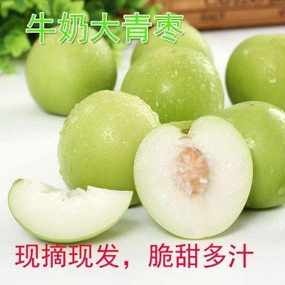 现摘现发台湾牛奶大青枣当季新鲜水果冬枣贵妃脆甜蜜枣子5斤包邮