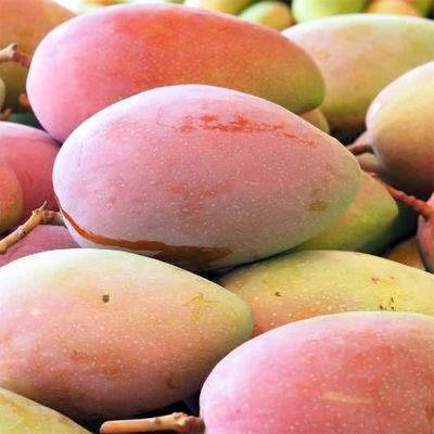 现摘发货海南贵妃芒果新鲜水果当季热带青甜心10斤装多规格选择