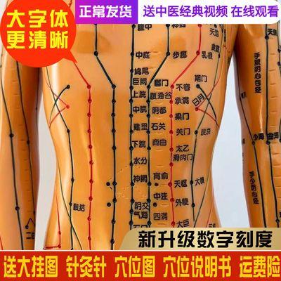 中医针灸穴位图人体模型教学男女全身十二经络小皮人针灸穴位模特